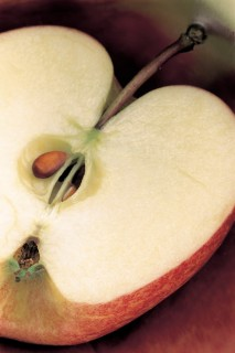 Apple-Cross-Section