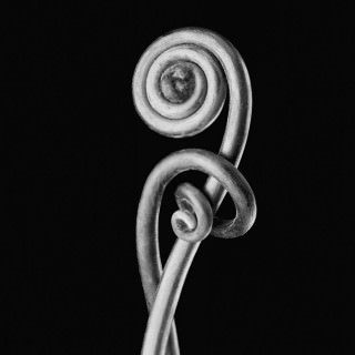 Fiddlehead-Fern-III