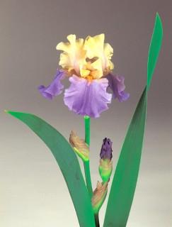 Iris-E.W.