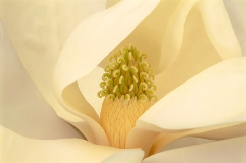 Color Botanicals - Magnolia