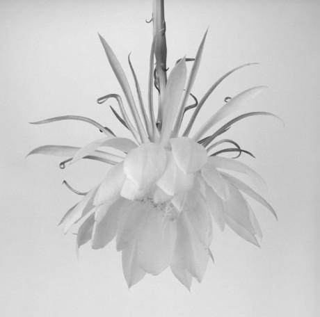 Orchid-Cactus