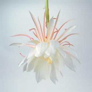 Orchid-Cactus-II