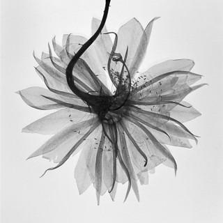 Pressed-Orchid-Cactus