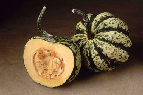 Squash-Cross-Section