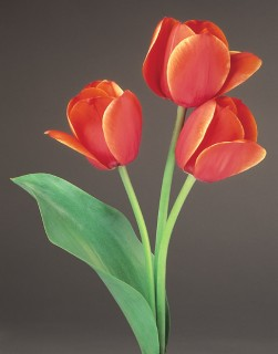 Three-Tulips-with-Leaf