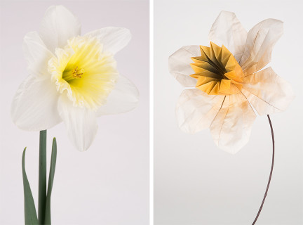 Daffodil II © Amy Lamb | Photograph of Origami Daffodil by Robert J. Lang