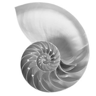 Nautilus Half Shell