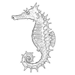 Seahorse-Abeloff-Spiral